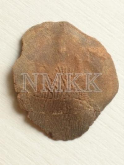 Glyptolepis baltica Gross, zvīņa;