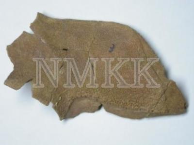 Laccognathus panderi Gross, entopterygoideum (fragments);