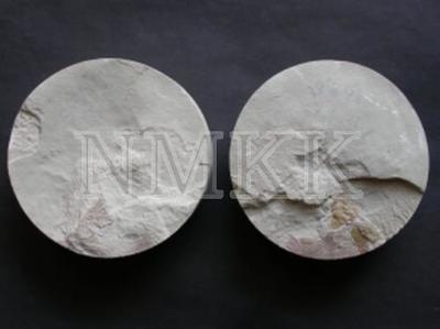 ? Grossilepis sp., galvas vairogs (fragments);