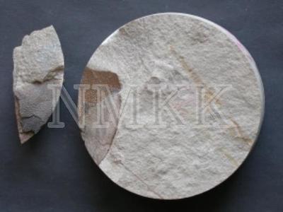 Plourdosteus trautscholdi ? (Eastm), fragments;