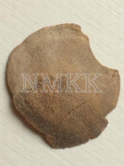Glyptolepis baltica Gross, zvīņa (fragments);