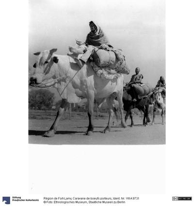 Région de Fort-Lamy, Caravane de boeufs porteurs