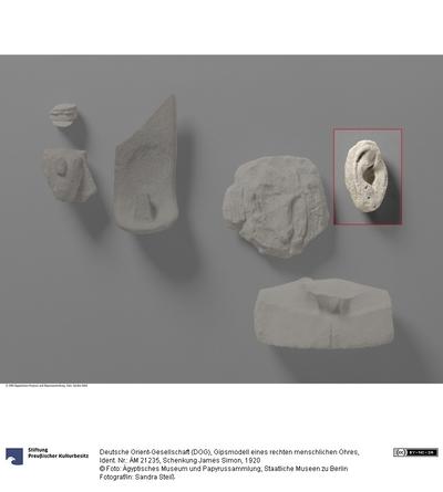 Gipsmodell eines rechten menschlichen Ohres
