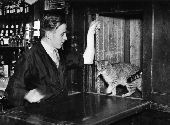 Resident cat takes a lift to the bar.