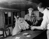 Pet donkey in The Blue Bell Inn, Beltring,  Kent. The landlord, Stuart Butchers offers him a glass of beer and a customer look on. 1957