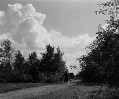 Snelliuslaan. bosgezicht tegen de oude grens van de Noorderbegraafplaats