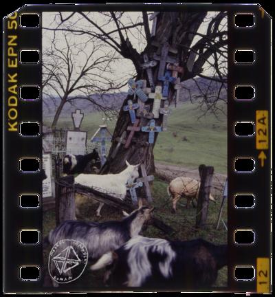 În satele din Oltenia, la moartea cuiva, țăranii obișnuiau să picteze câte o cruce din lemn pe care o băteau pe un copac la drum. O făceau pentru a fi iertați de promisiunile pe care nu și le-au ținut față de cel dus. De multe ori, de-a lungul drumului ajung să se înșire pâlcuri de copaci cu cruci.