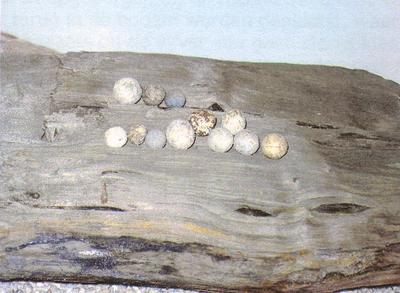 Anoniem, twaalf musketkogels, 17de-18de eeuw, lood.