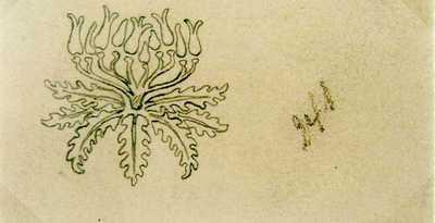 Manufacture de Céramiques Décoratives de Hasselt (1895-1954), ontwerptekening met bloem-en bladornament, potlood op papier.