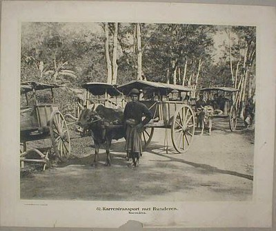 82. Karrentransport met Runderen. Soemátra