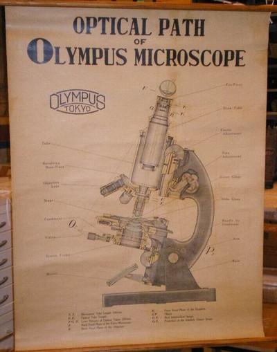 Optical Path of Olympus Microscope
