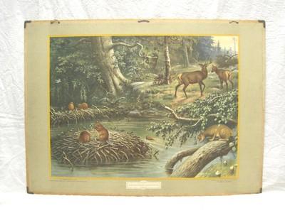 Noord-Amerikaansche woudbewoners