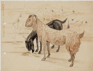 zwarte en bruine geit