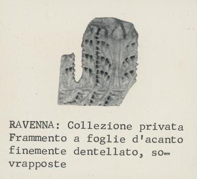 Ravenna: Collezione Privata. Frammento di foglie d'acanto finemente dentellato, sovrapposte