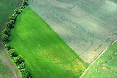 C-DL-201100338 - letfoto vegetačních příznaků