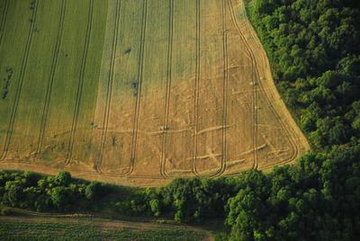 C-DL-201200047 - letfoto vegetačních příznaků