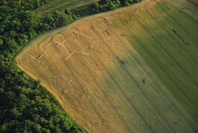C-DL-201200055 - letfoto vegetačních příznaků