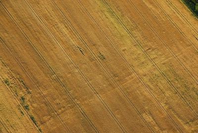 C-DL-201100236 - letfoto vegetačních příznaků