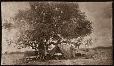 Military tent under a tree | Tenda militare sotto un albero