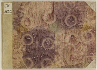 Prima parte de' fiori, e disegni di varie sorti di ricami moderni [...] : [estampe, livre de modèles]