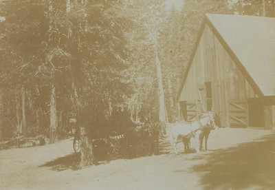 Yosemite Valley: relay of horses and of