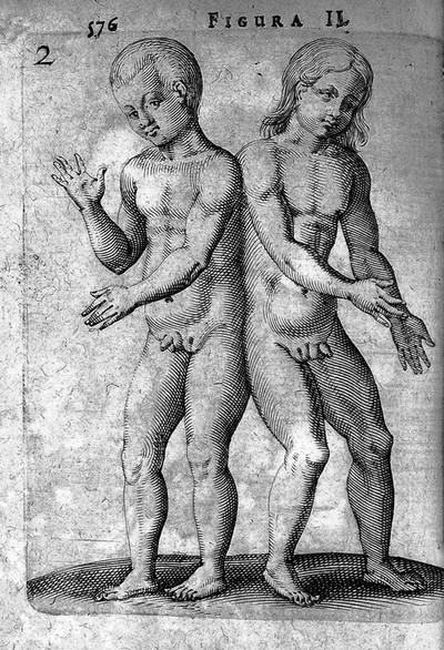 Hermaphrodit wikipedia