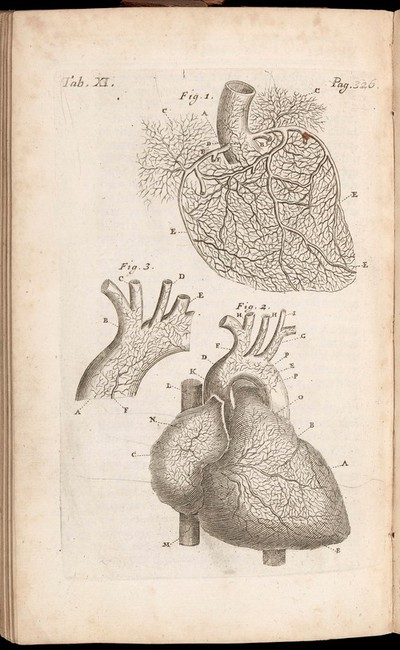 Diagram of the Heart, Fig. 1 - The root of the trunk of the Aorta, Fig. 2 - The heart of a boy about 10 years old, Fig. 3 - The trunk of the Aorta of an adult man