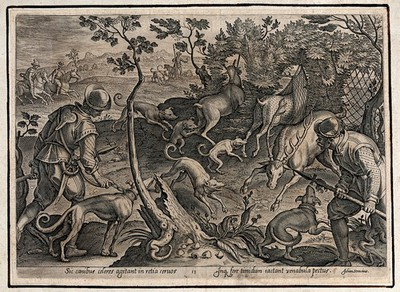 Hunting: dogs scare the deer into nets, whilst a hunter throws his spear into the antlers of a stag. Engraving by Philipp Galle after Stradanus.