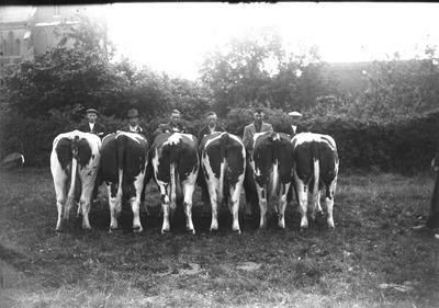 Dochtergroep van de Beerse fokvereniging. De begeleiders zijn v.l.n.r. Jan Barten, Huub Peters, Tontje Cuppen, Jan Gerrits, Piet van Katwijk en Harrie Barten. De namen van           de koeien zijn bij de redactie bekend.