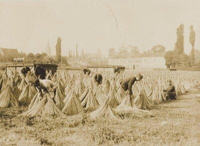 Duitse soldaten zijn op een veld bezig met het bundelen van vlas. Op de achtergrond zijn een kerk, schoorstenen en enkele gebouwen zichtbaar.