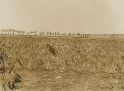In een veld zijn enkele boeren bezig om vlas in schoven te drogen te zetten. Op de achtergrond is een bomenrij zichtbaar.