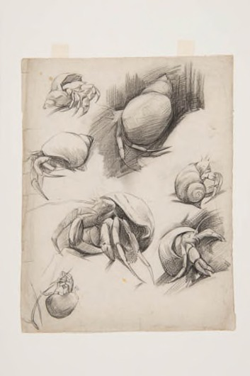 Krabben in wulken