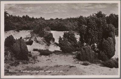 Zandverstuiving met jeneverbessrtuiken en naaldbomen op de achtergrond.