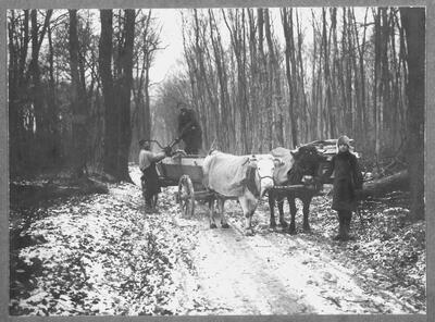 Beim Holzen in der Hardt um 1916, s'Dille Adams Emil, Heiri Meier und Sohn Emil
