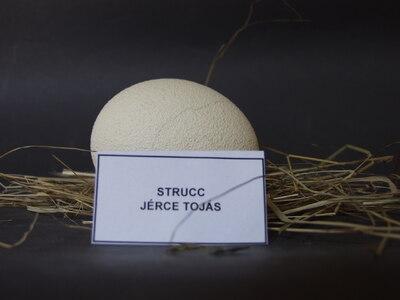 Strucc jérce tojása