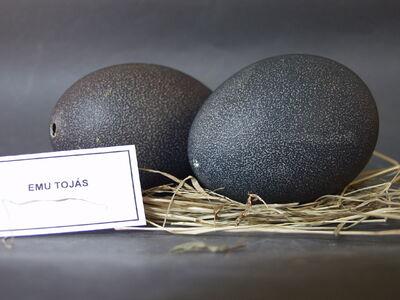 Emu tojásai