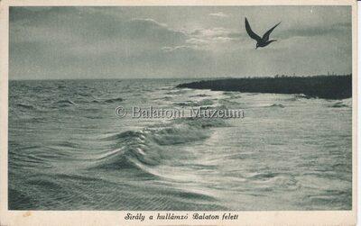 Sirály a hullámzó Balaton felett