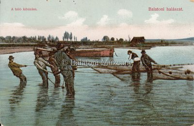 Balatoni halászt. A háló kihúzása.