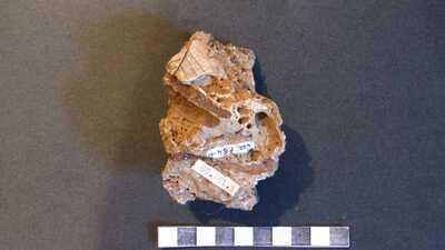 Paleobotanikai gyűjtemény