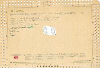 Achnanthidium lanceolatrum var elliptica