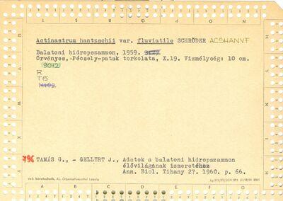 Actinastrum hantzschii var fluviatile