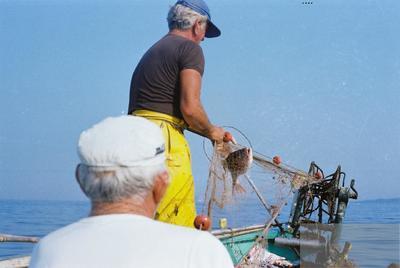 Fonds Henri-Paul Brémondy : Un pêcheur capture un poisson dans le filet - Photographie en lien avec le corpus sonore La pêche traditionnelle varoise dans les années 1970