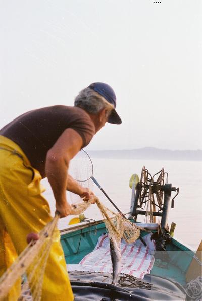 Fonds Henri-Paul Brémondy : Un pêcheur qui a capturé un poisson - Photographie en lien avec le corpus sonore La pêche traditionnelle varoise dans les années 1970