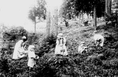 Blåbärsplockning, en kvinna och fyra barn. Karl-Erik, Sven, Margit, Ingrid och Lina. Almby