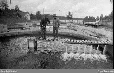 Klotens fiskodling, 22 juli 1974