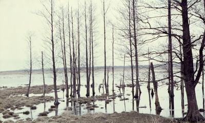 Hammar vid Kvismaren, april 1962.