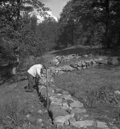 Riseberga klosterruin. En man. 10 augusti 1943.