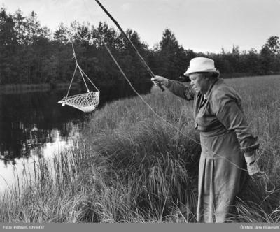 Håvfiske, kräftfiske med håv, en kvinna. Bilden är tagen i Nora 1971. Publicerad den 7 augusti 1971 och den 5 augusti 1993.