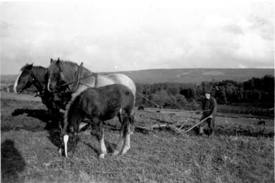 Höstplöjning 1938.