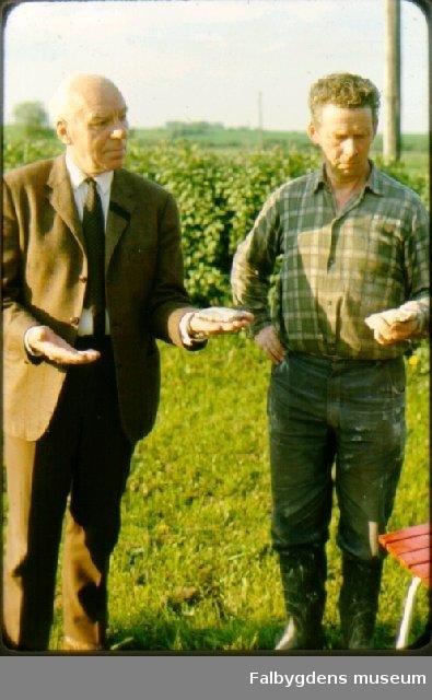 Assar Friberg t.v. och Bertil Blomquist t.h. med flintämnen upphittade under årens lopp vid jordbruksarbete på den långsluttande kullen mellan boningshuset och järnvägen. Vartofta hd, Luttra sn, Sköttning, Lillegården  3:1.